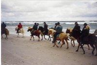 En karavan av islandshästar på Norsta Aurar.